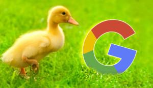 duckduckgo-google-644x373